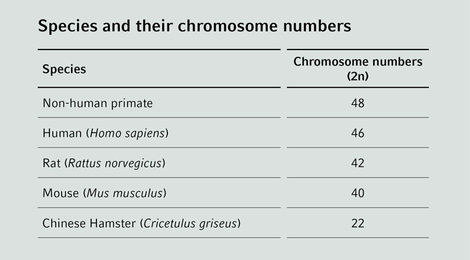 Species Chromosome Numbers - Cell Handling Eppendorf