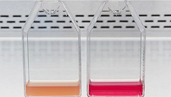 Contaminated culture media vs. non-contaminated culture media - Cell Handling Eppendorf