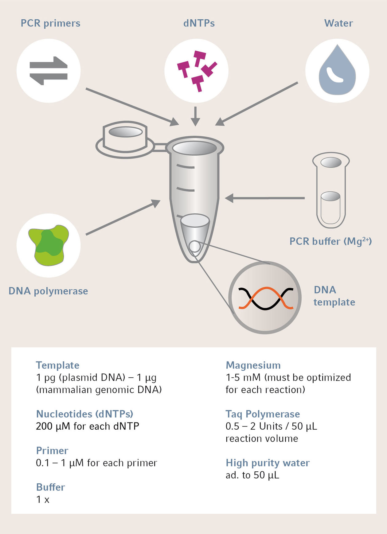 Which Reagents Do I Need to Replicate DNA in the Laboratory