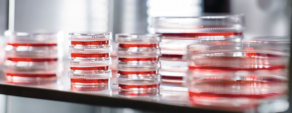 Preventing Contamination in Cell Culture Labs